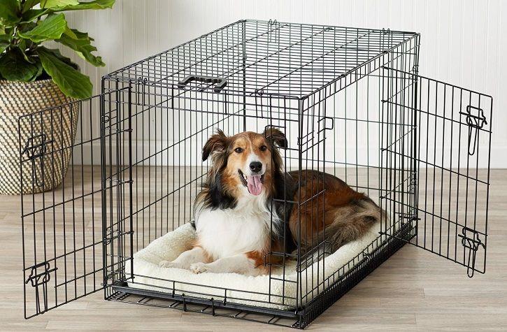 Meilleur Cage pour Chien
