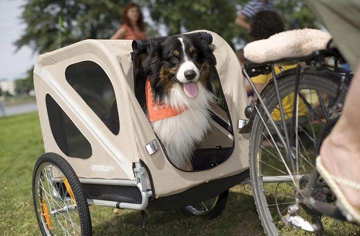 Meilleur Remorque Vélo pour Chien