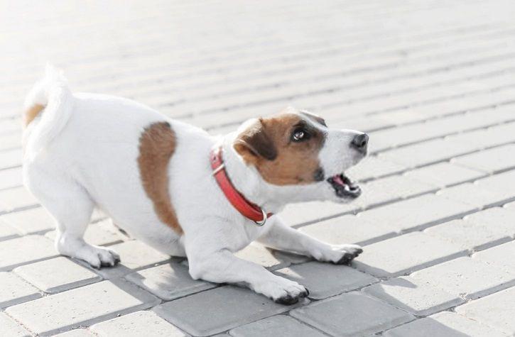 comment empecher un chien de mordre
