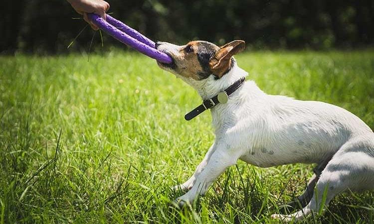 Activités amusantes pour les chiens