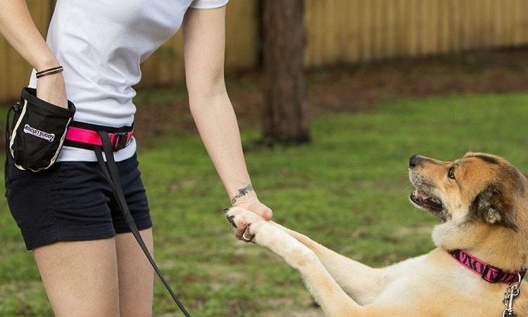 Comment améliorer le comportement de votre chien