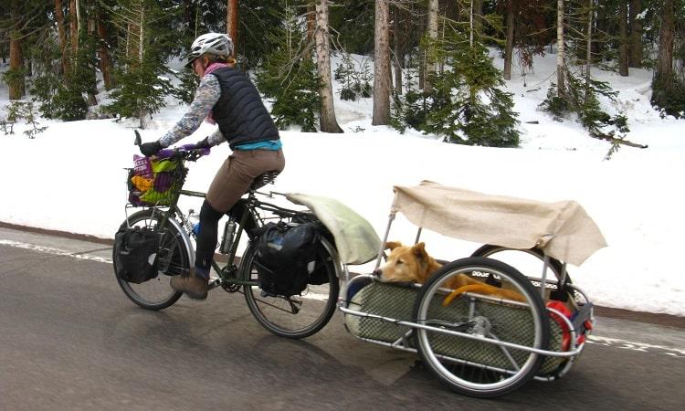 Comment faire du vélo avec des chiens en toute sécurité