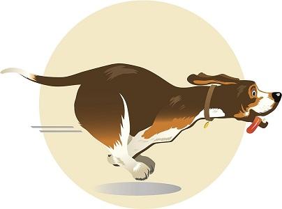 Pourquoi les chiens senfuient-ils de chez eux