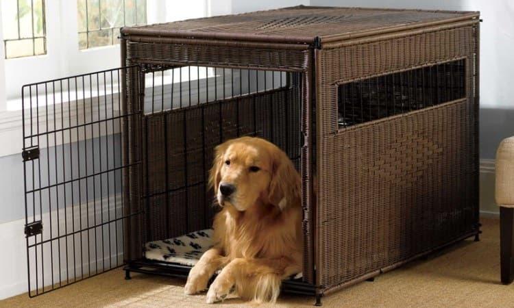 cage pour chien d'intérieur