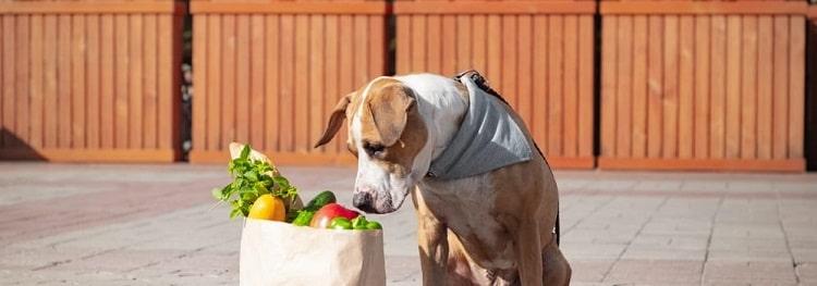 digestion saine du chien