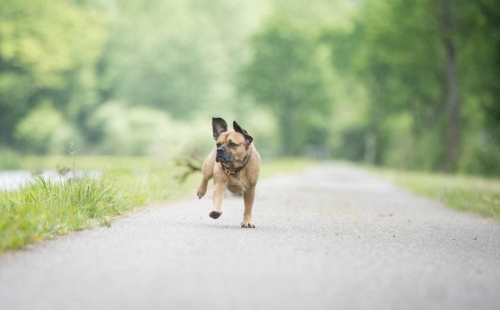 empêcher un chien de s'enfuir