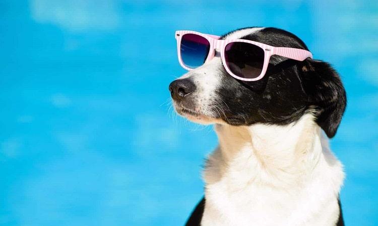 conseils pour garder les chiens au frais