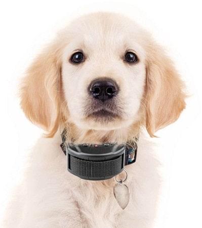 guide de collier de dressage de chien