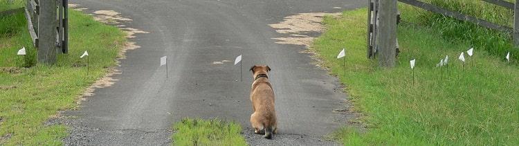 installer une clôture pour chien sans fil