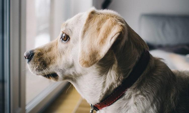 soulager l'anxiété du chien