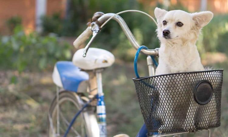 Meilleur Panier Vélo pour Chien