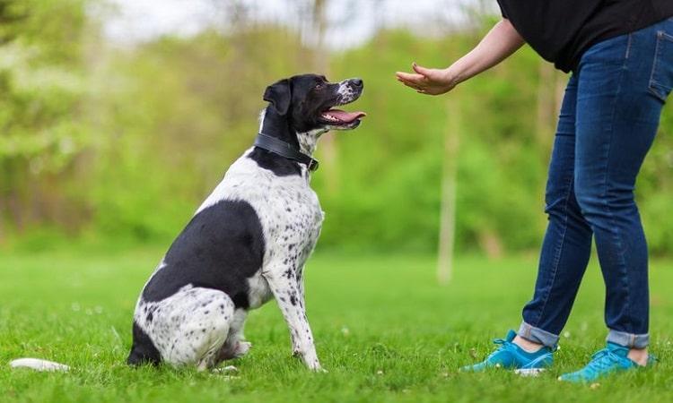 commandes de dressage de chiens