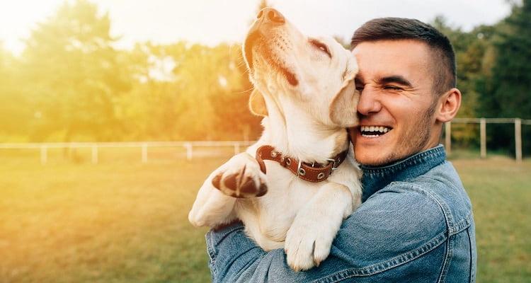 conseils de santé de chien