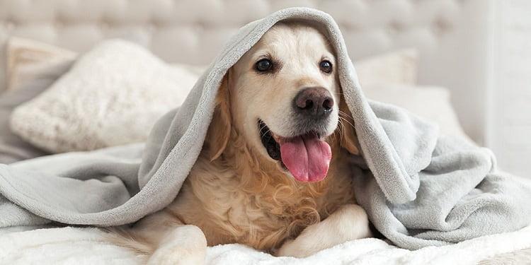 couverture de lit pour chien