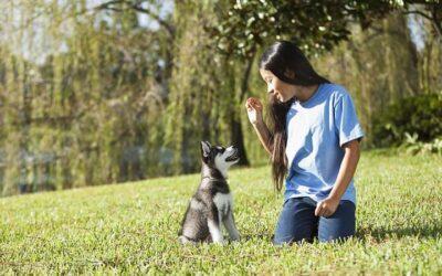 5 Commandes essentielles de dressage de chiens