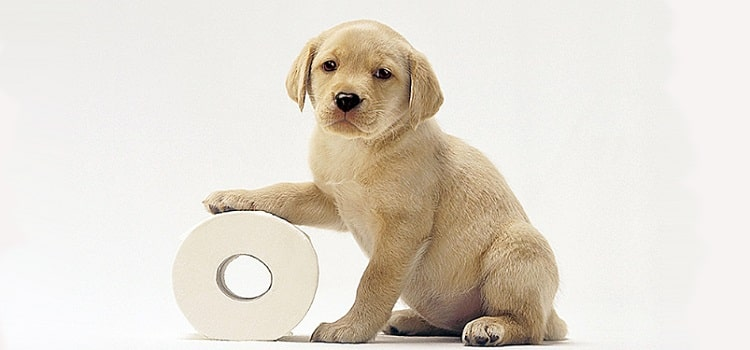 former les chiens à la toilette