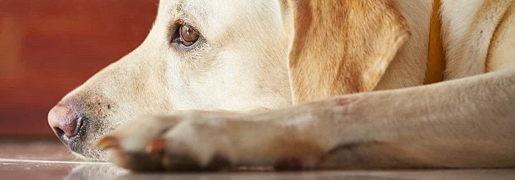garder les articulations du chien en bonne santé