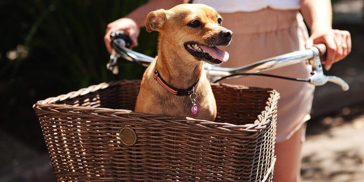 guide dachat de panier pour chien