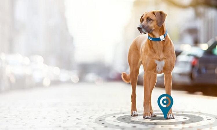 meilleur GPS pour chien