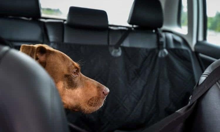 meilleur housse protection voiture chien