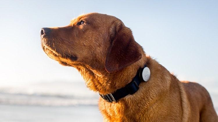 meilleur traqueur de chien