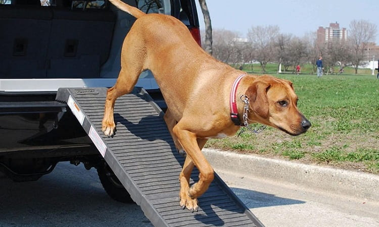 meilleue rampe pour chien