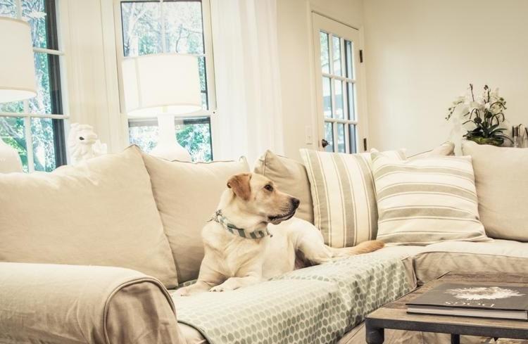 meubles à lépreuve des chiens