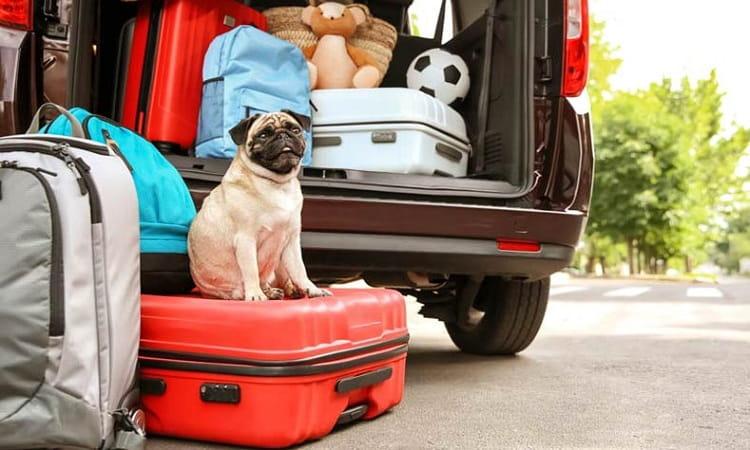 planifier un voyage avec chien