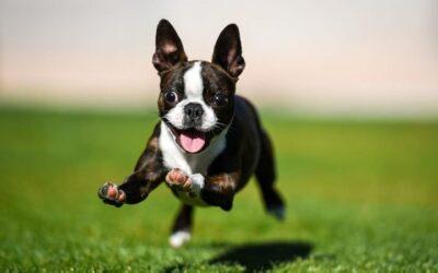 Comment prévenir les problèmes articulaires chez les chiens ?