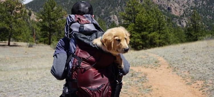 sac à dos de voyage pour chien